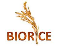 Dal riso nuovi ingredienti per alimenti, cosmetici ed integratori alimentari