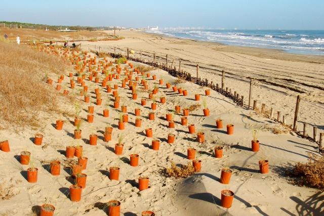 Matrimonio Spiaggia Marina Di Ravenna : Nuove piante per salvare le dune di marina ravenna