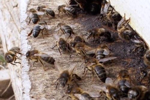 Ambiente e biodiversit a ripristinare tutto ci pensano - Diversi tipi di api ...