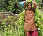 Ragazza di etnia Tamang al lavoro nei campi di miglio che circondano il villaggio di Simigaon (2000 m) (Foto di Marco Sazzini)