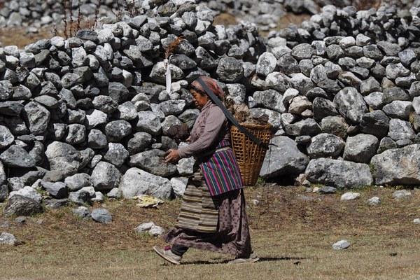 Donna di etnia Sherpa mentre raccoglie sterco di Yak per alimentare il fuoco al villaggio di Na (Foto di Marco Sazzini)