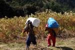 Portatrici di etnia Tamang (Foto di Marco Sazzini)