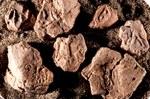 """3. Alcune delle numerosissime bullae ritrovate: sigillature di argilla con impronte di sigillo che venivano usate come """"bolle di accompagnamento"""" per lo scambio di merci. Risalgono all'epoca dell'impero ittita, XIII secolo avanti Cristo."""