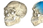Due viste di una ricostruzione composita digitale dei primi fossili di Homo sapiens dal sito di Jebel Irhoud basata su scansioni micro-tomografiche di vari fossili originali. Credit: Philipp Gunz, MPI EVA Leipzig, License: CC-BY-SA 2.0.