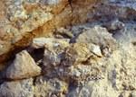 Due dei nuovi fossili di Jebel Irhoud così come sono stati trovati durante gli scavi. Credit: Steffen Schatz, MPI EVA Leipzig, License: CC-BY-SA 2.0.