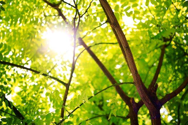 Ufficio Verde Imola : Salute sicurezza e sistemi del verde il nuovo corso di dottorato